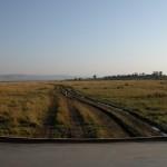 マサイ・マラ国立保護区の面積は約1600平方km。国内最大ではないが、もっとも人気のある観光スポットとして知られている。いわゆる「エコツーリズム」に則った観光だが、クルマの轍や草の踏み均しは問題なのだという。