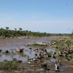 すぐ近くに川が流れていた。鳥たちがたむろしている。鼻をさす悪臭。いったいどんなところなんだ?