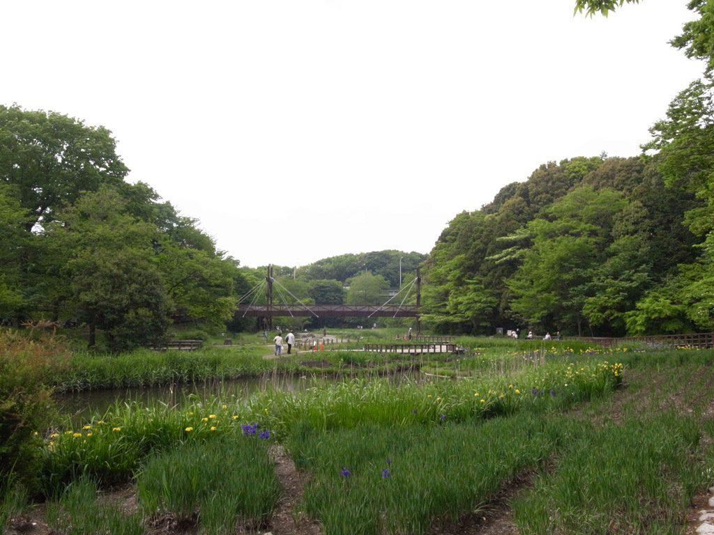 厚木基地の北には広大な森林地帯が広がり、公園や釣り堀などが点在する。(撮影=bg)